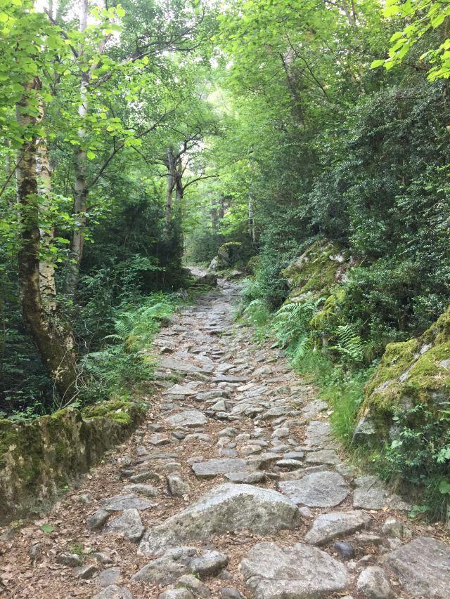 Camí de la Muntanya (SS)